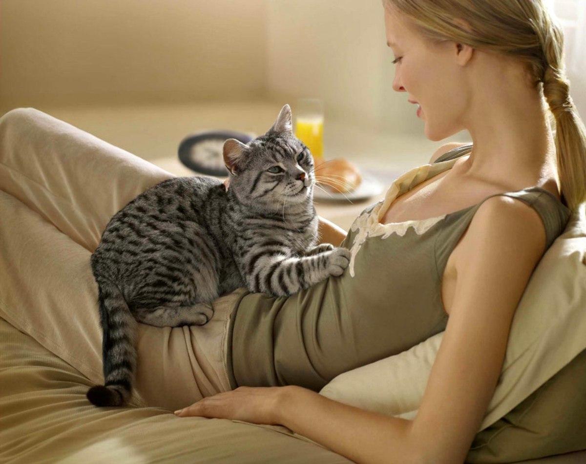 Кот прыгает на живот беременной