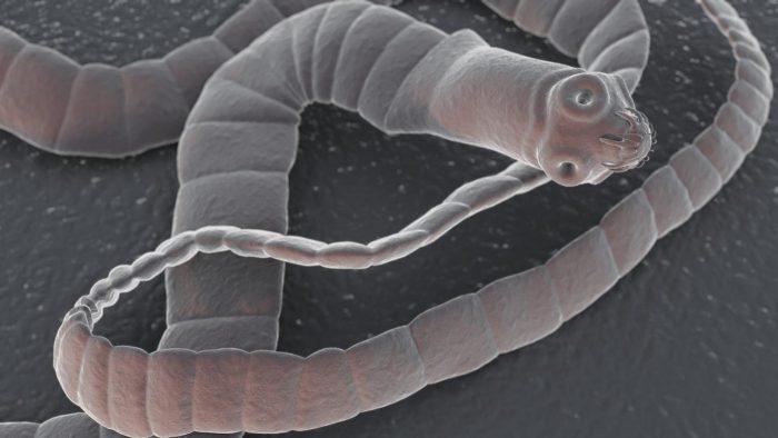 кишечное паразитарное заболевание