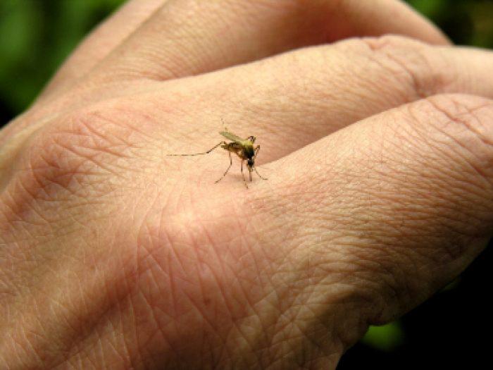 укусы кровососущих насекомых комаров