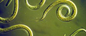 полостные черви
