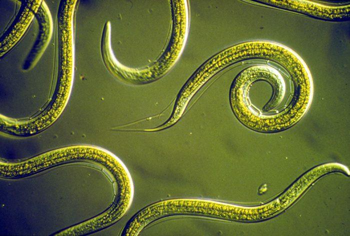 паразиты в кале у ребенка