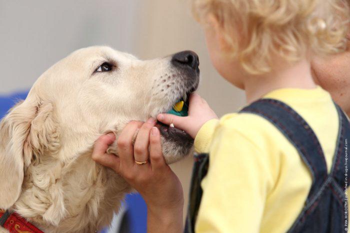 контакт человека с больным животным
