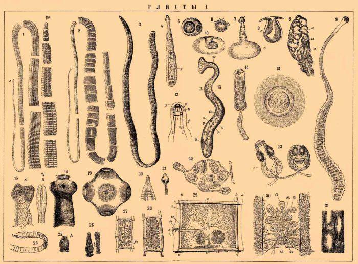 виды кишечных паразитов в организме